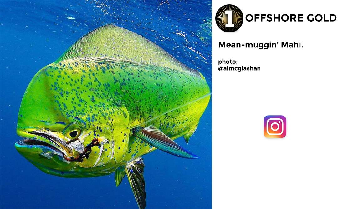 Pelagic Best of December Social Media Fishing 1