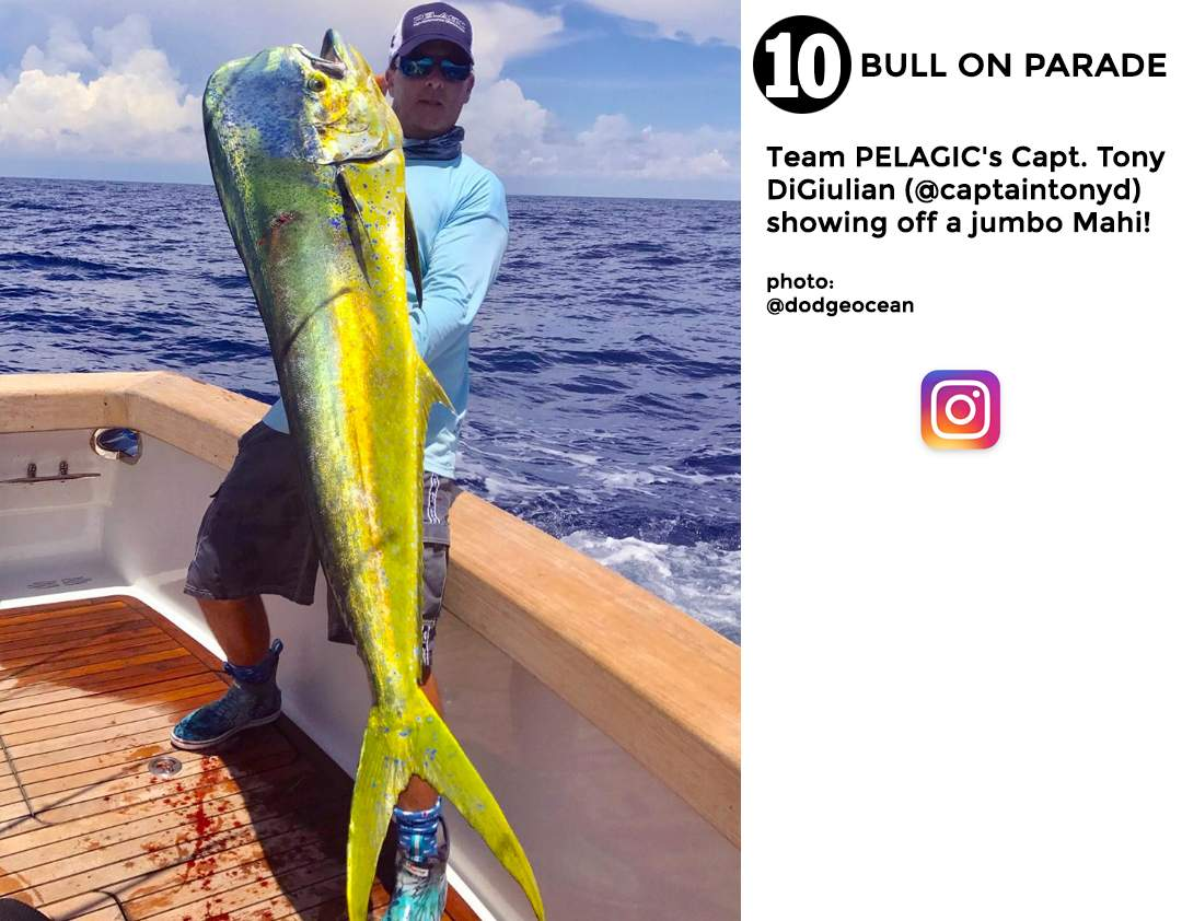 Pelagic Best of August 2017 Fishing Social Media 10