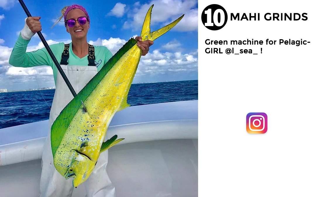 best of november social media pelagic gear 10