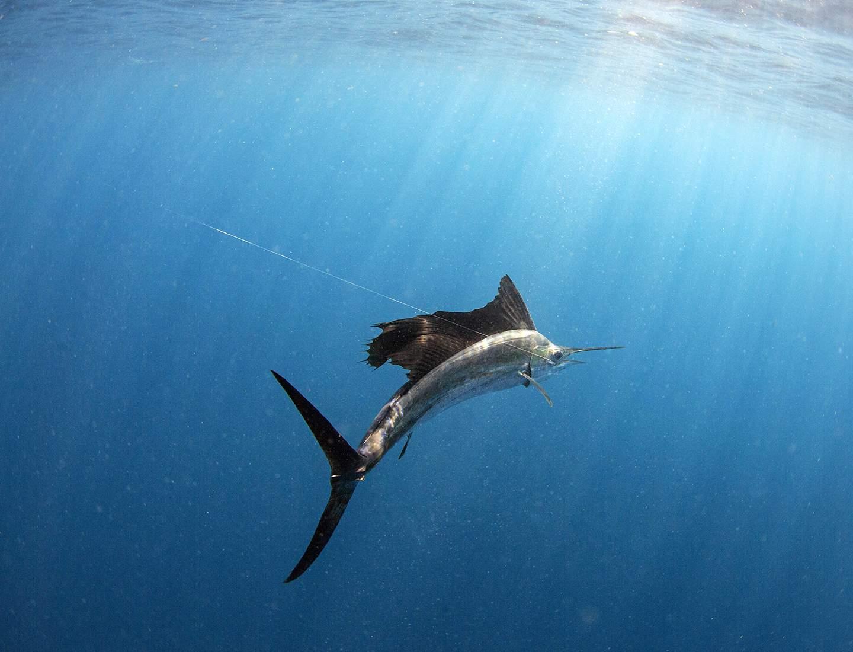 underwatersail1