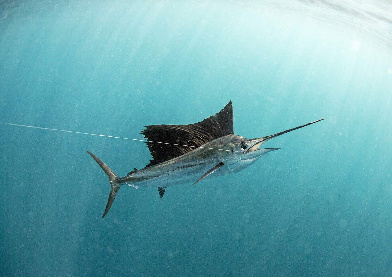 underwatersail2