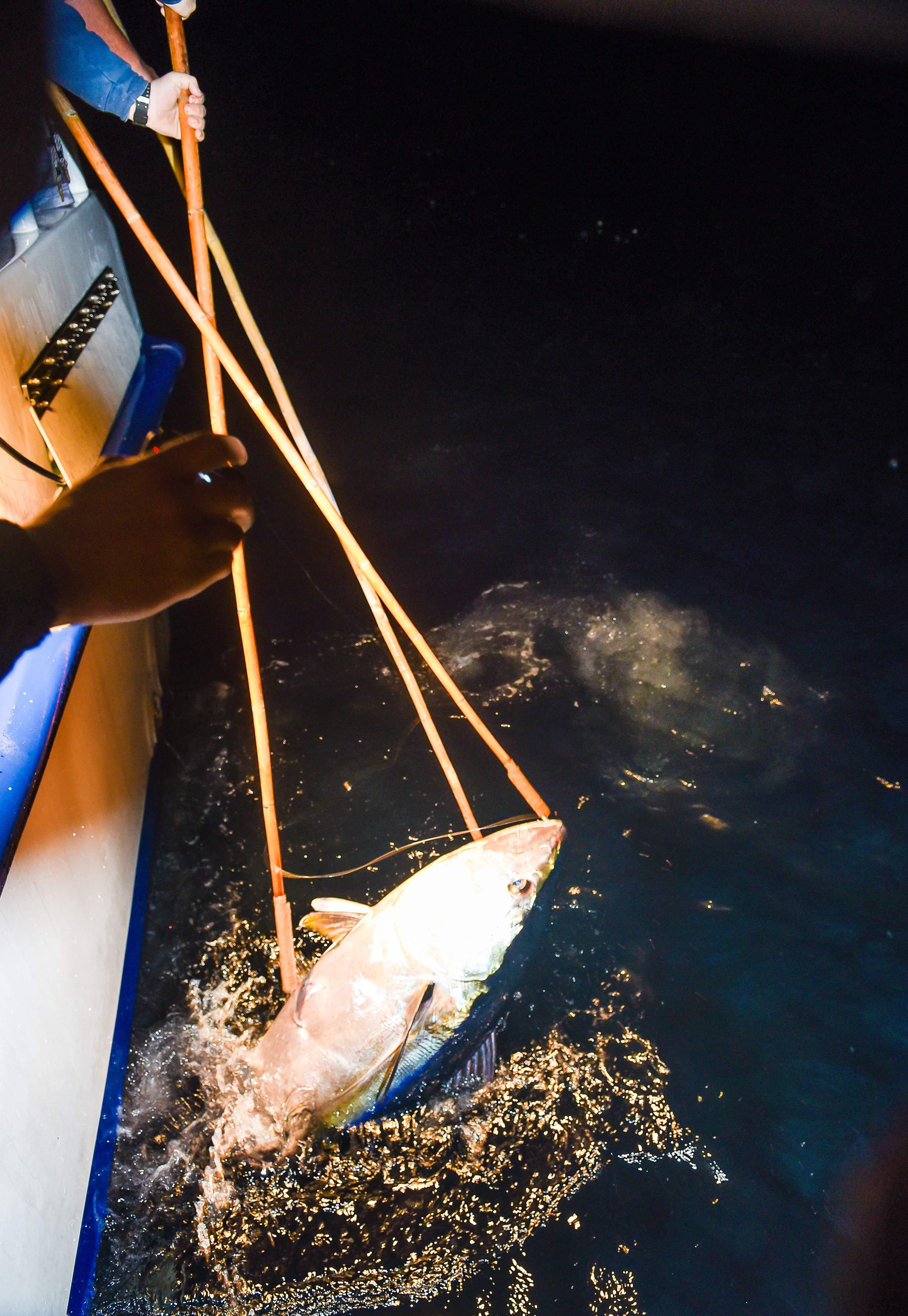 Pelagic Catchin A Buzz Sales Expedition Excel Sportfishing 12