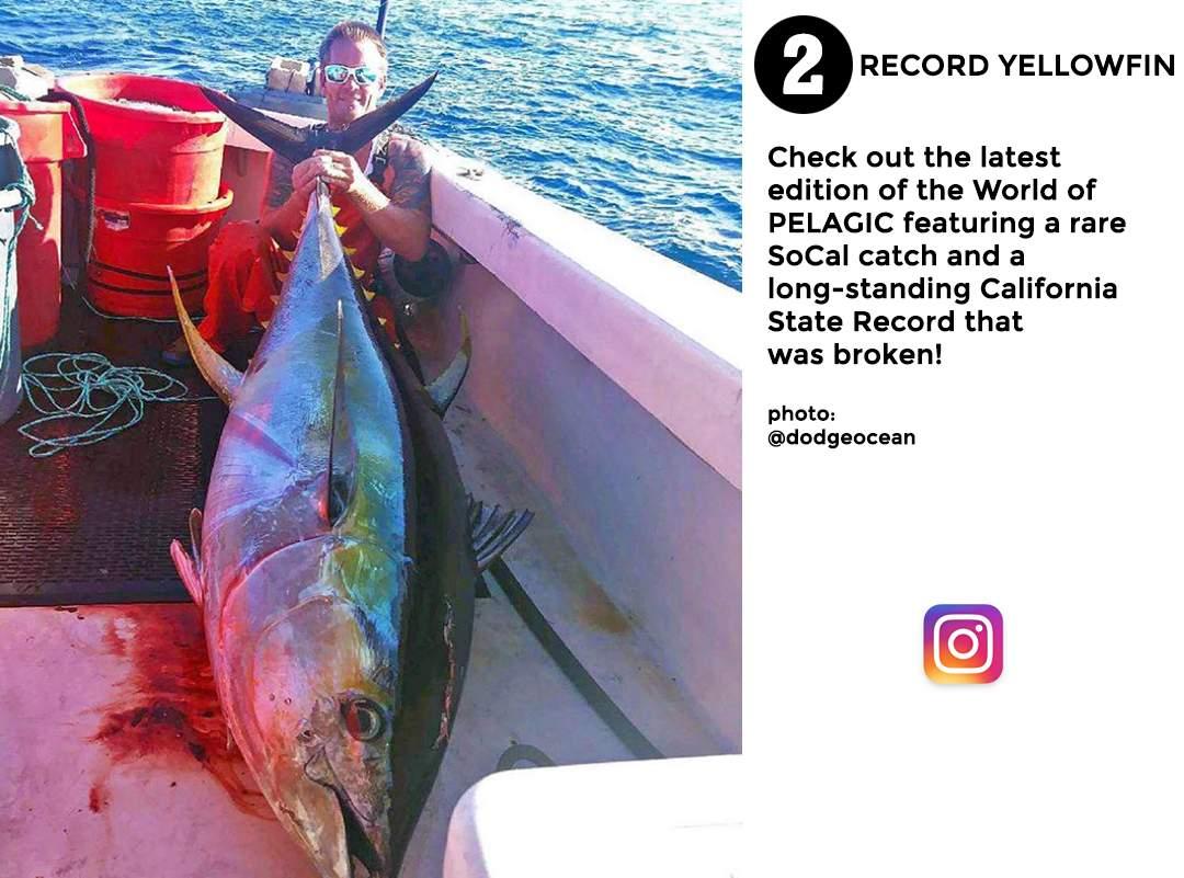 best of november social media pelagic gear 2