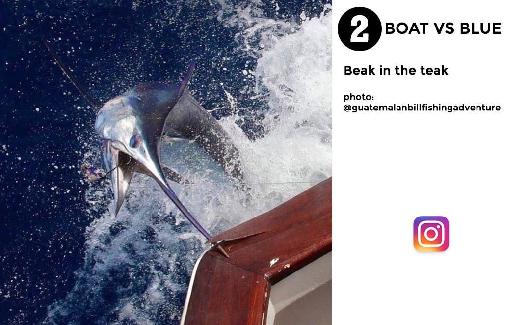 Pelagic Best of December Social Media Fishing 2