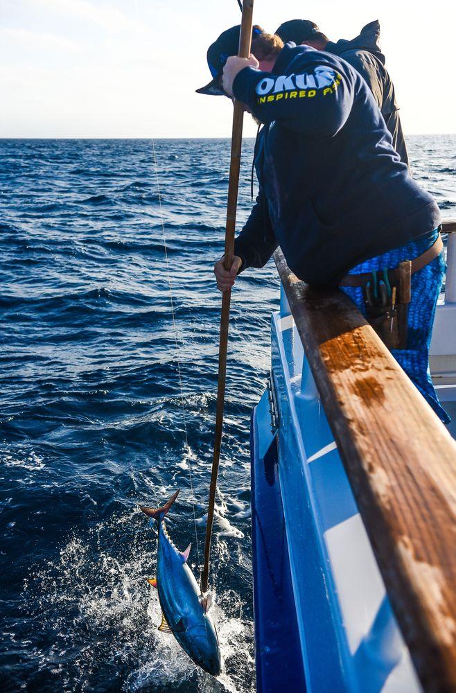 Pelagic Catchin A Buzz Sales Expedition Excel Sportfishing 32