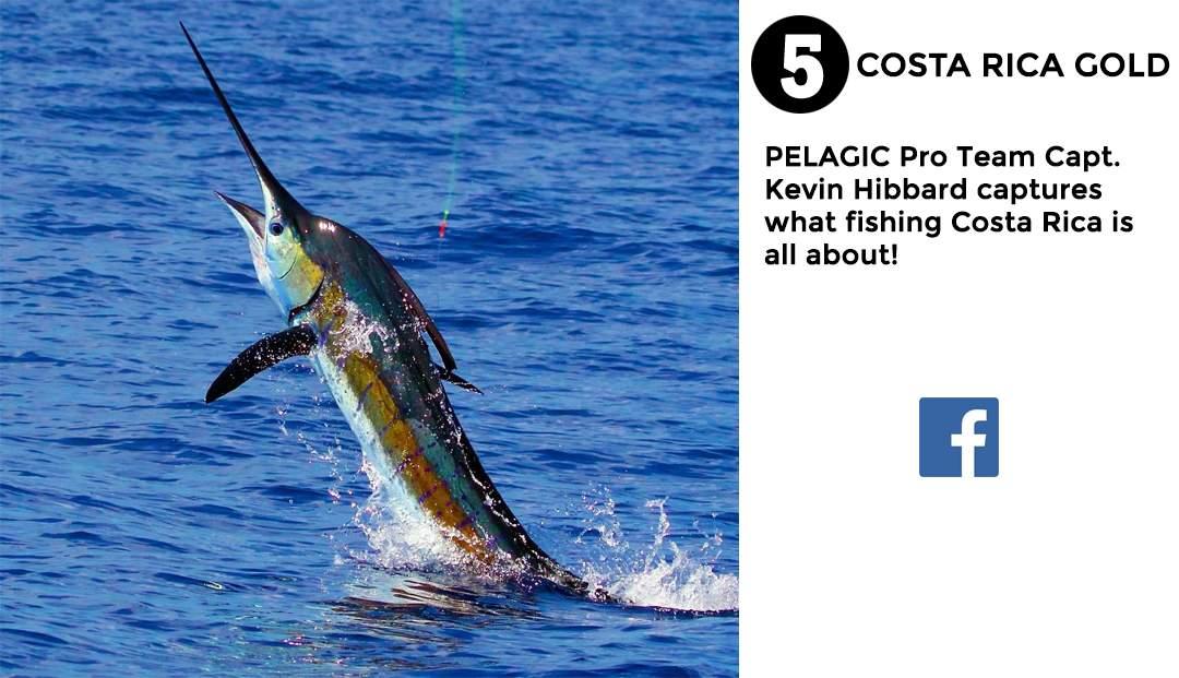 Pelagic Gear Best of May 5