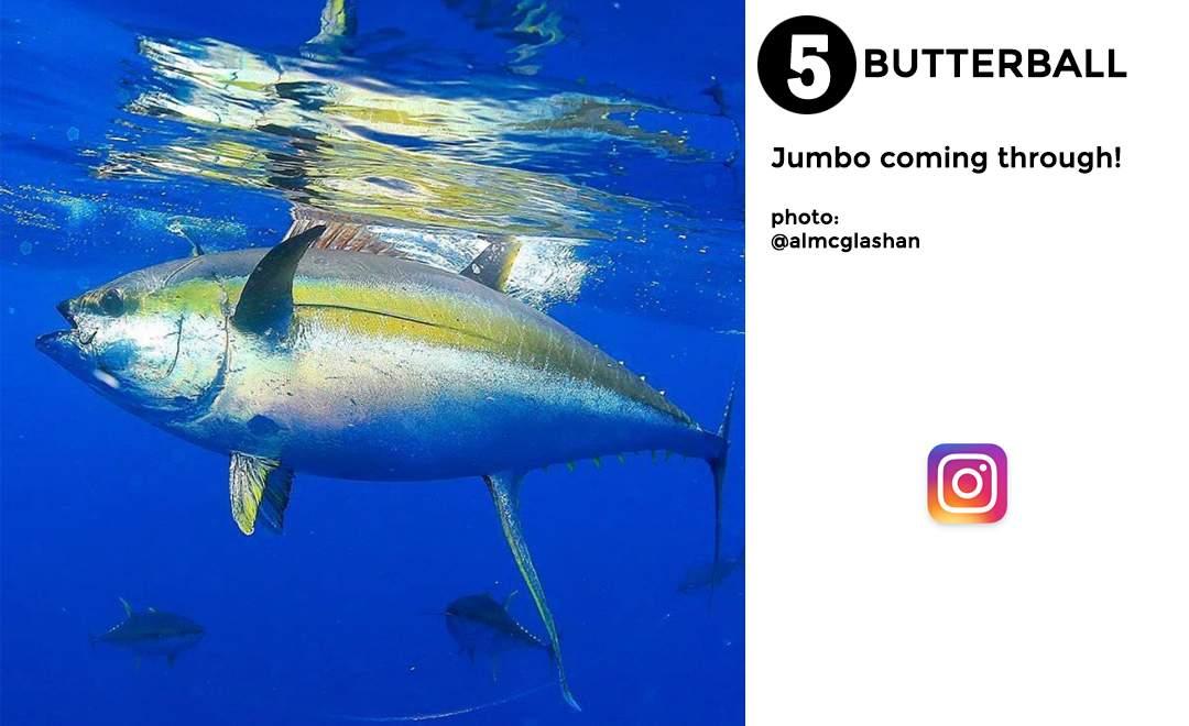 best of november social media pelagic gear 5