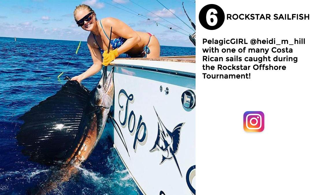 best of Pelagic social media Janurary 2017 #6