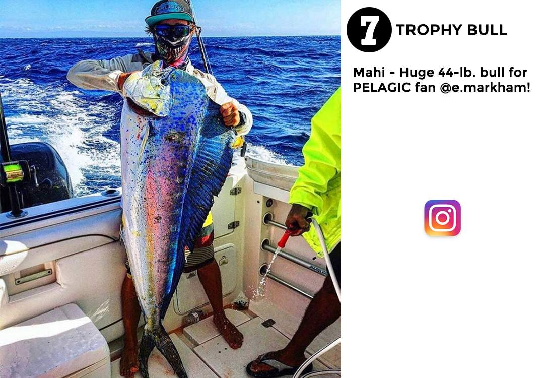 Pelagic Gear Best of March Social Media 7