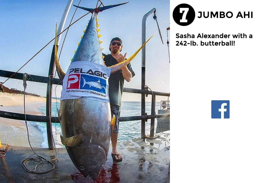 Best of Pelagic Social Media Fishing 7