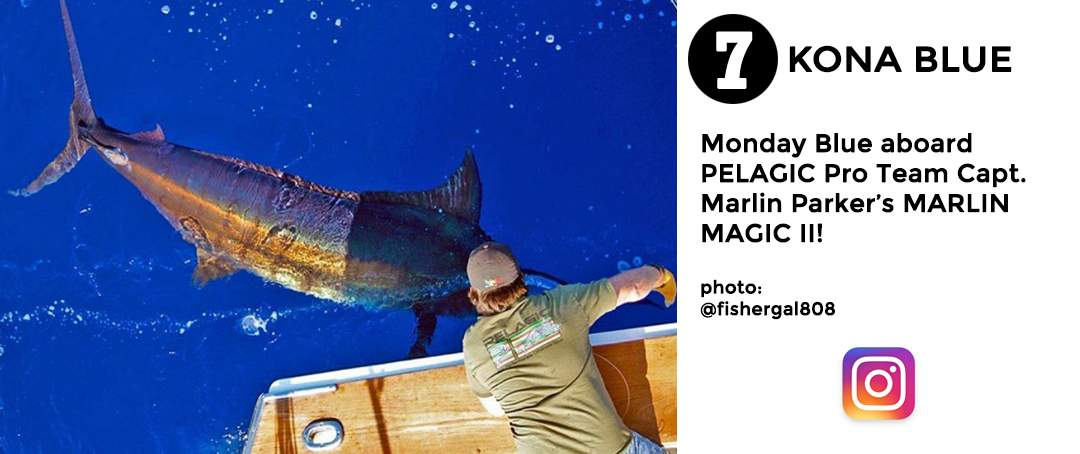 best of november social media pelagic gear 7