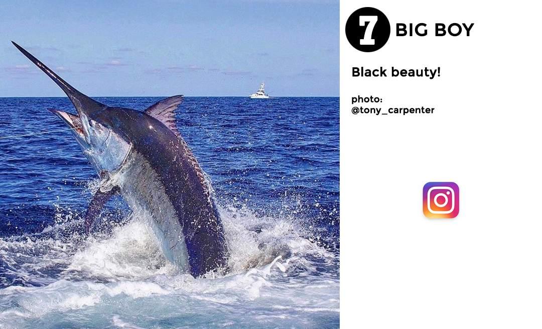 Pelagic Best of December Social Media Fishing 7