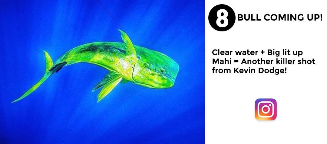 best of november social media pelagic gear 8