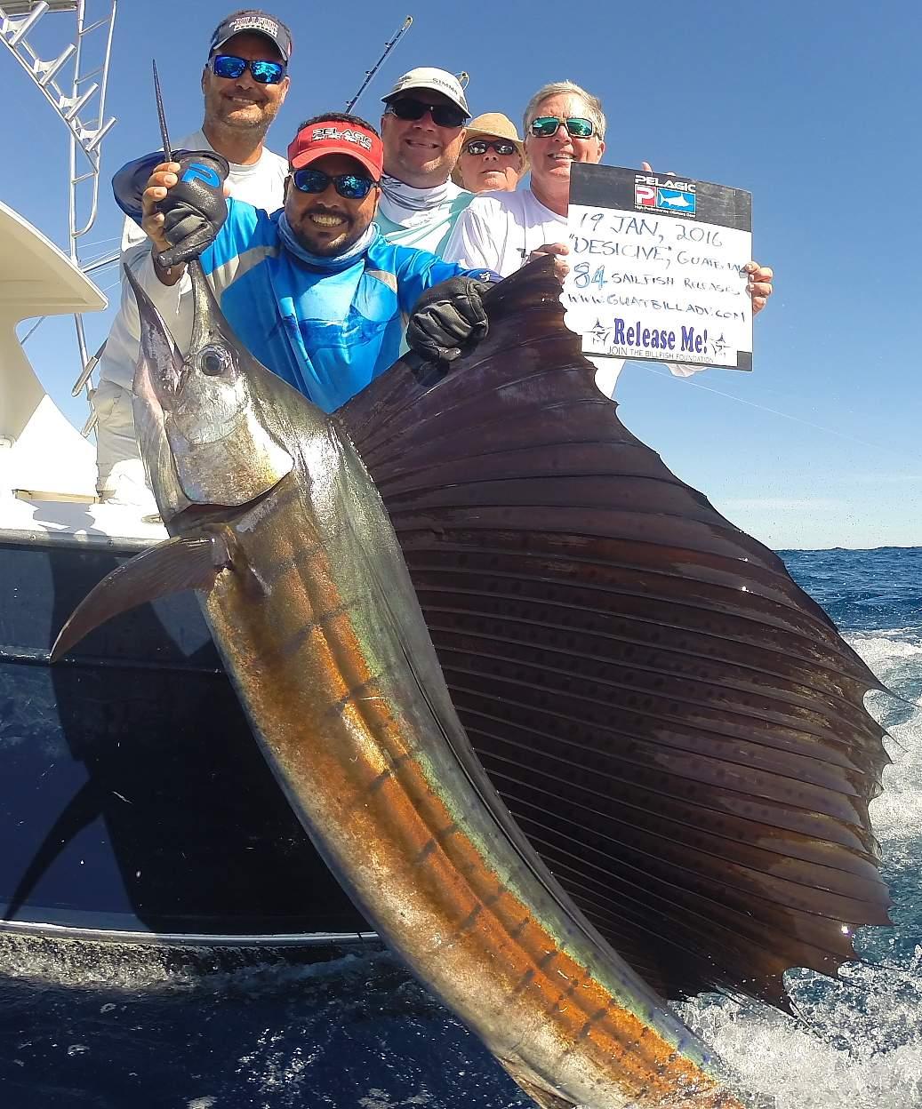 Pelagic Gear Species Profile Sailfish 2