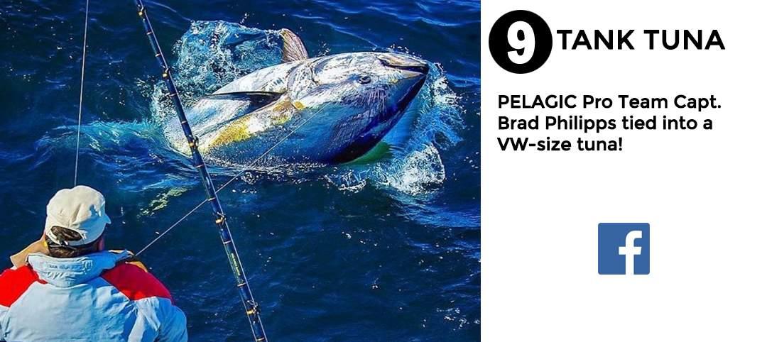 best of november social media pelagic gear 9
