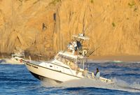 Boats Pelagic Rockstar Tuna Tournament 4