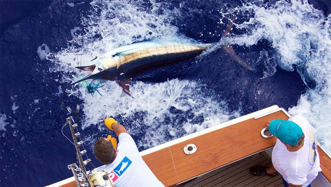 Hawaiian Blue Marlin