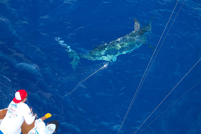 Pelagic Year End Recap Fishing Events Tournaments 8