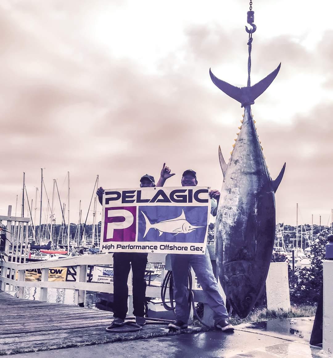 PELAGIC_Bluefin Tuna_Bob Woodard_SoCAL