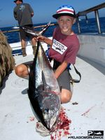 Bluefin Tuna TRIBUTE Pelagic SEPT15 1