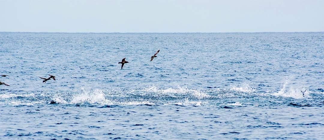 bluefin foamer
