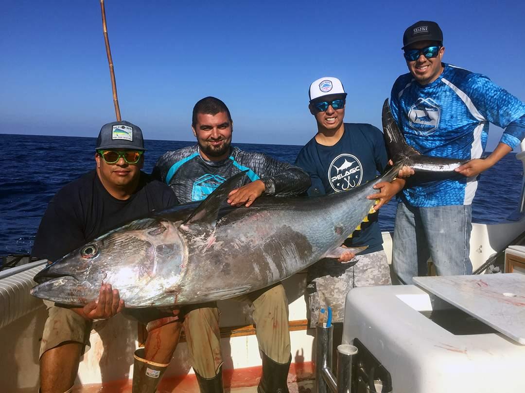 Bluefin2