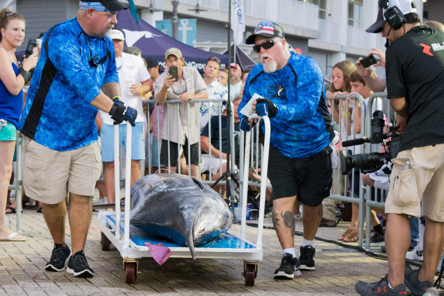 Blue Marlin Vaporteks