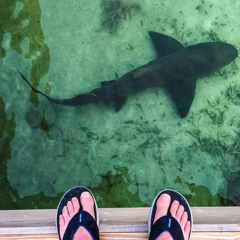 Pelagic Belize Paradise Fishing 7