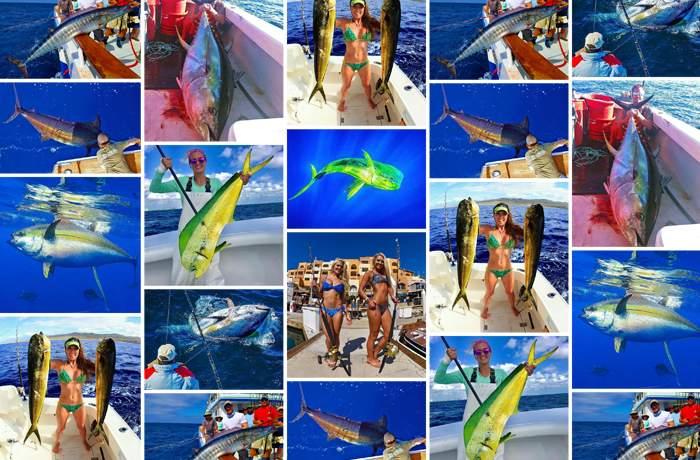 best of november social media pelagic gear 1
