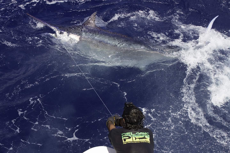 Pelagic Year End Recap Fishing Events Tournaments 14
