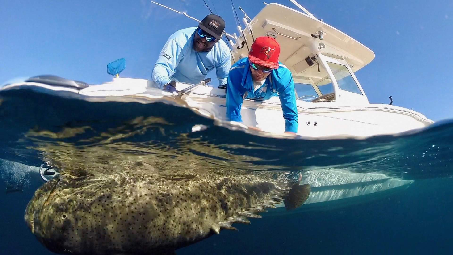 Pelagic Goliath Grouper Fishing 7