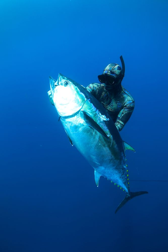 Southern California Bluefin Tuna