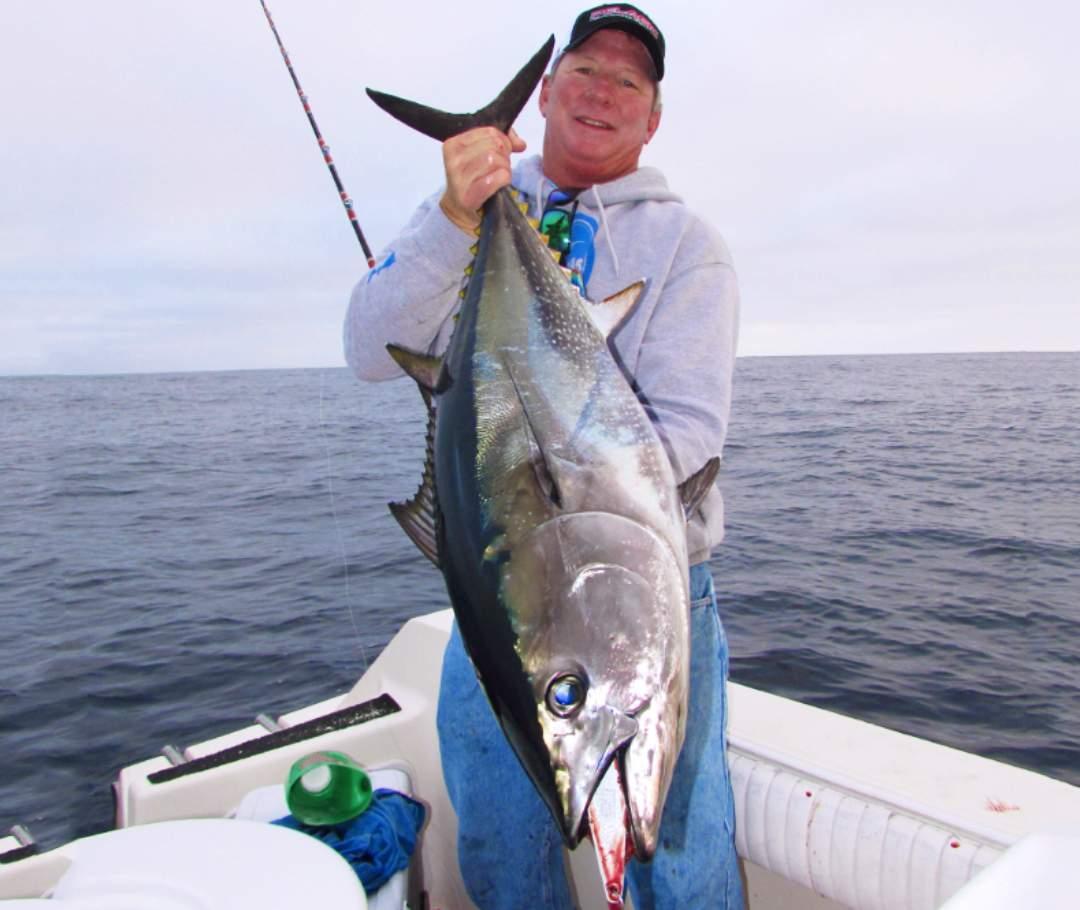 Bob bluefin