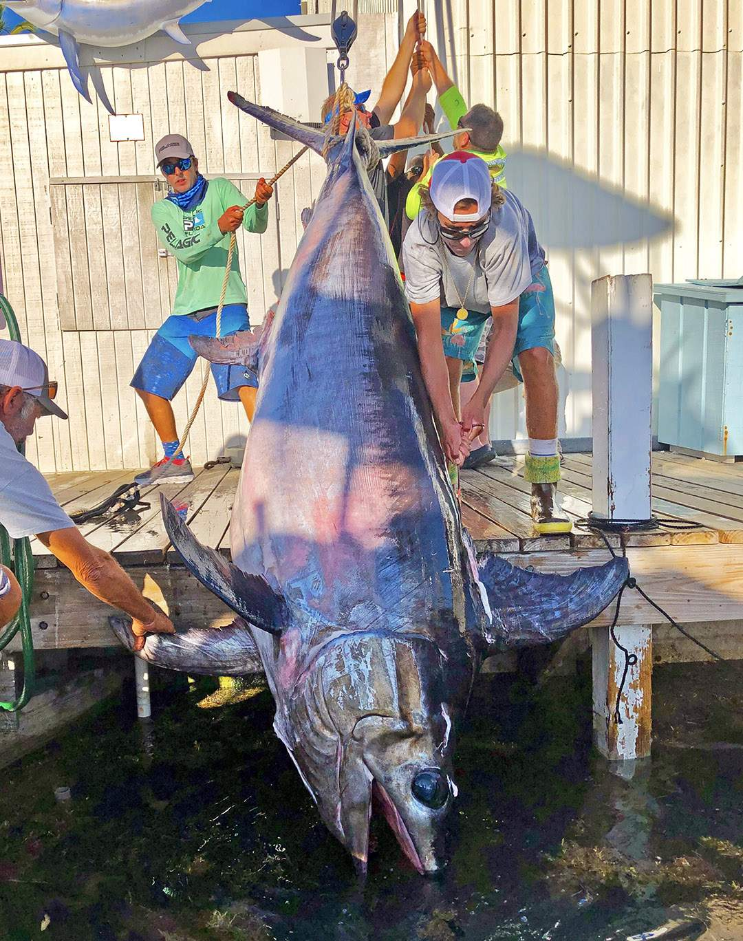 Giant Swordfish 757 pounds_Nick Stanczyk_Pelagic-1