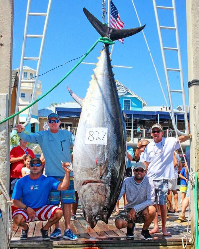 Record Bluefin Tuna 827 Caught Pelagic Joey Birbeck 1
