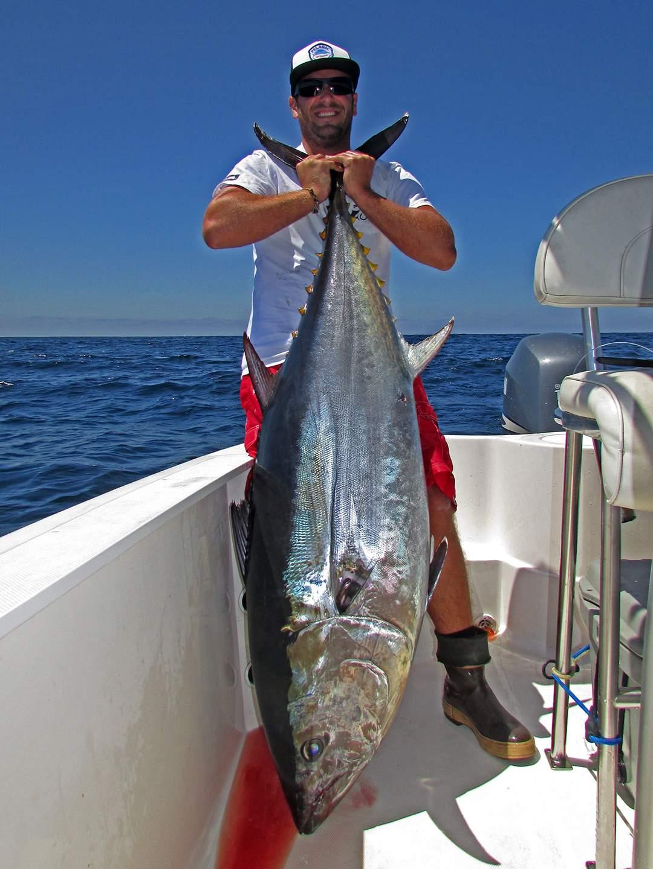 Bluefin6