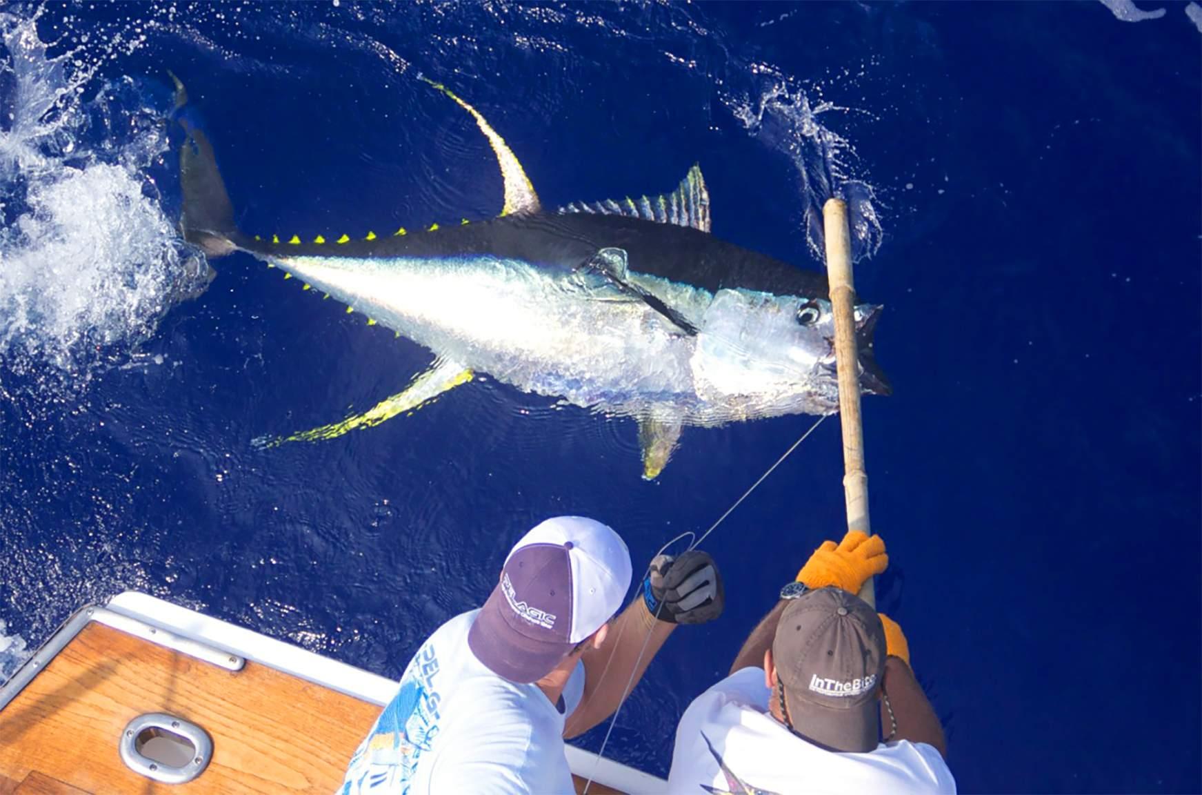 Hawiian Yellowfin Tuna