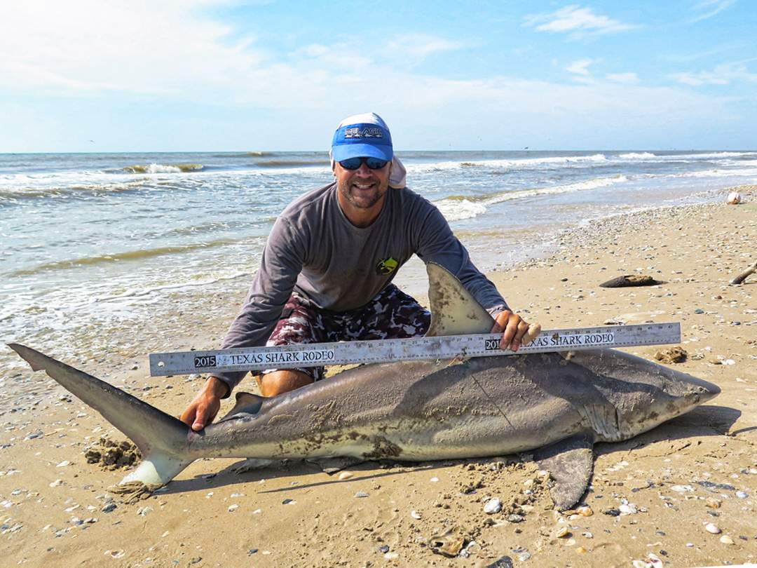 texas blacktip shark