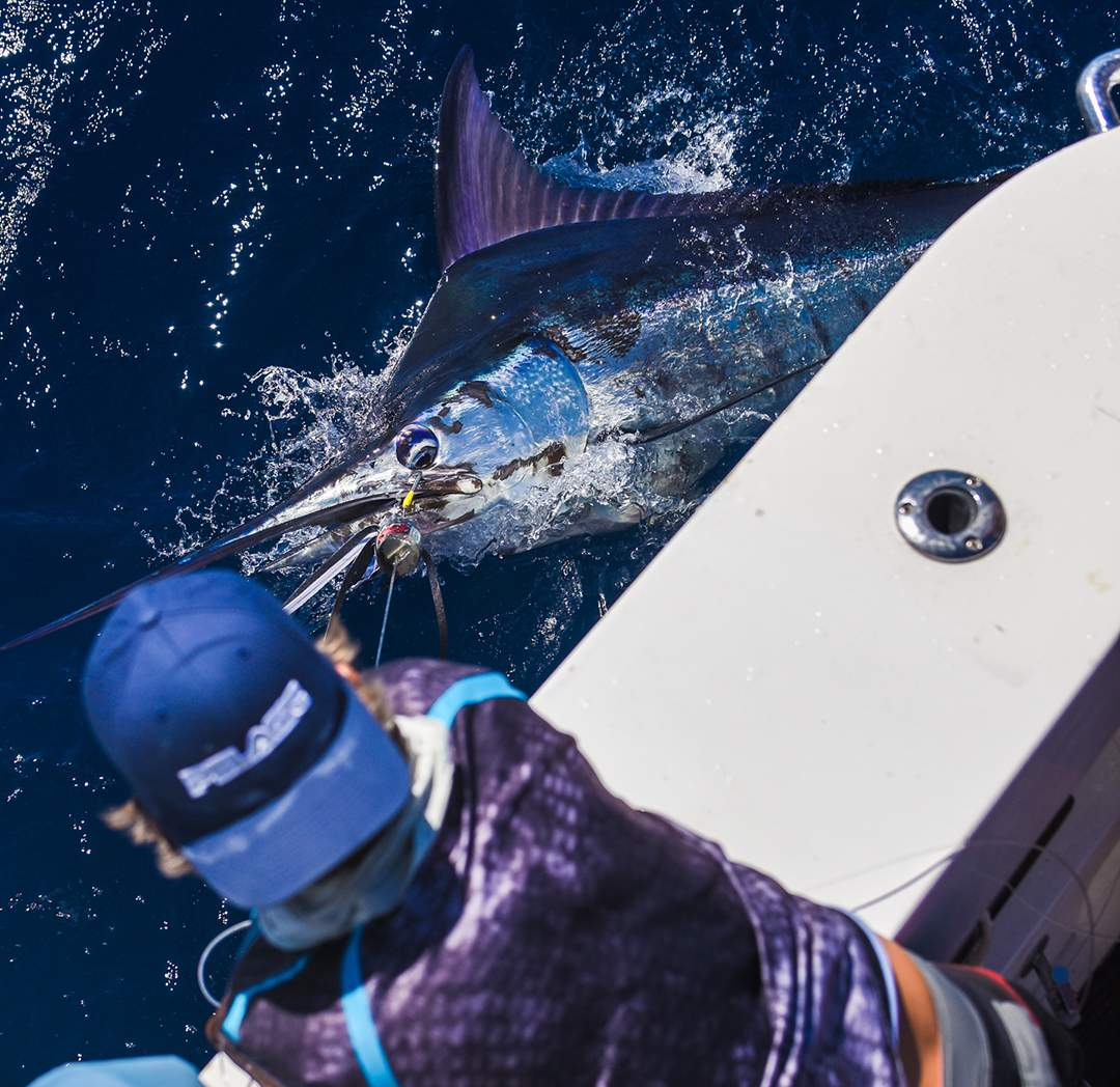 PELAGIC_Blue Marlin_Kevin Hibbard_Cabo_Bisbees 2017