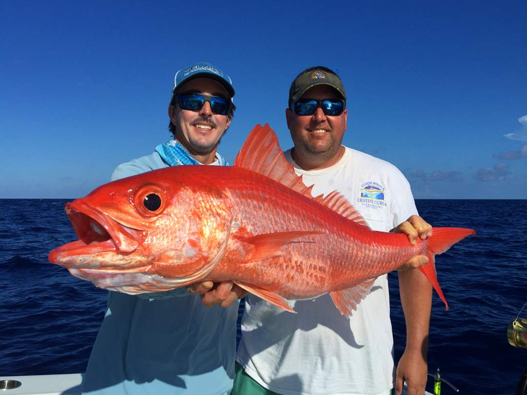 Queen Snapper_PELAGIC_Nick Stanczyk