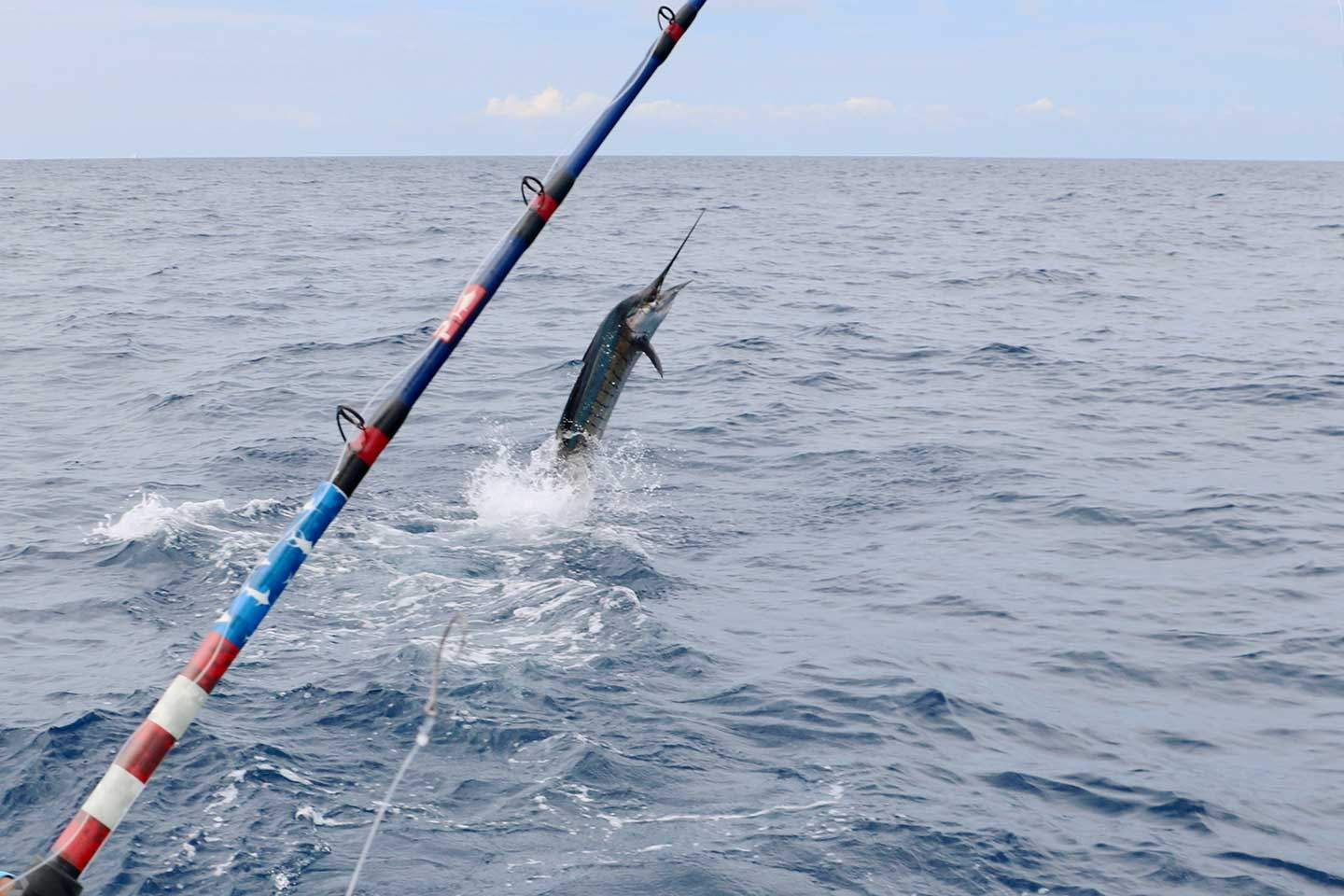 2019 Pelagic Rockstar Offshore Tournament Sailfish Jump 2