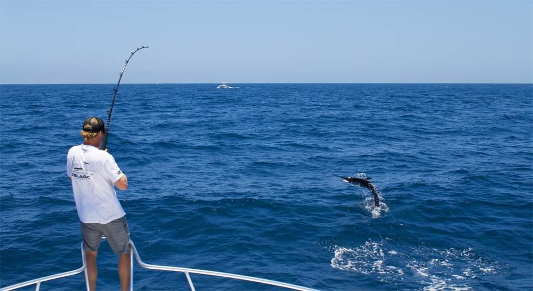 Striped Marlin_Pelagic Cabo Summer Slam-1