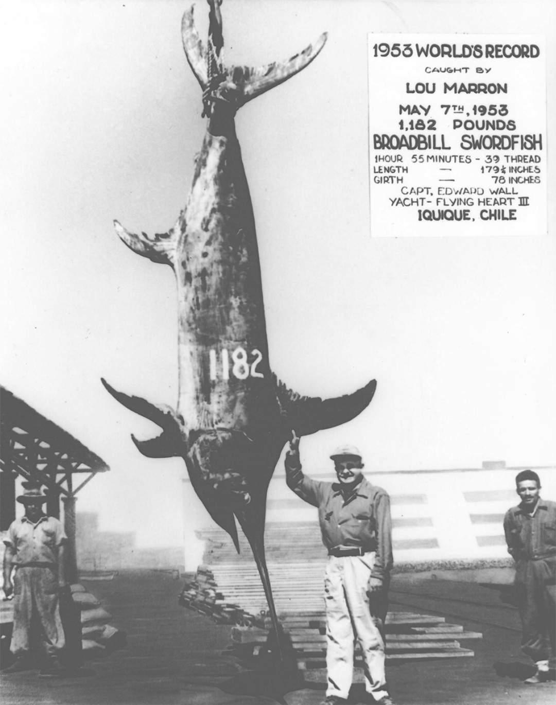 wr swordfish