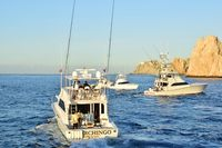 Boats Pelagic Rockstar Tuna Tournament 12