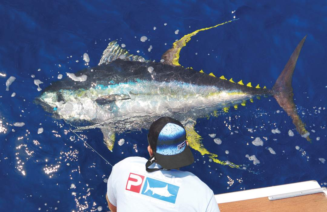 Yellowfin Tuna_PELAGIC Rockstar Offshore Tournament_Costa Rica