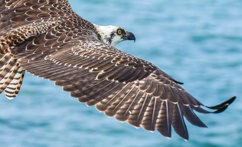 Pelagic Belize Paradise Fishing 20